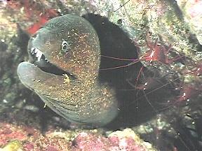 http://www.kuholmen.com/images/Gif/arawak_fish6.jpg